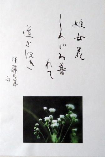 IMG_7735-500.jpg
